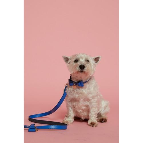 Dog Bow Tie Leash